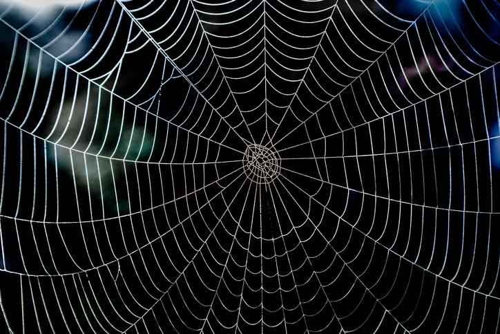 Is+Spider+Silk+Really+Stronger+Than+Steel%3F